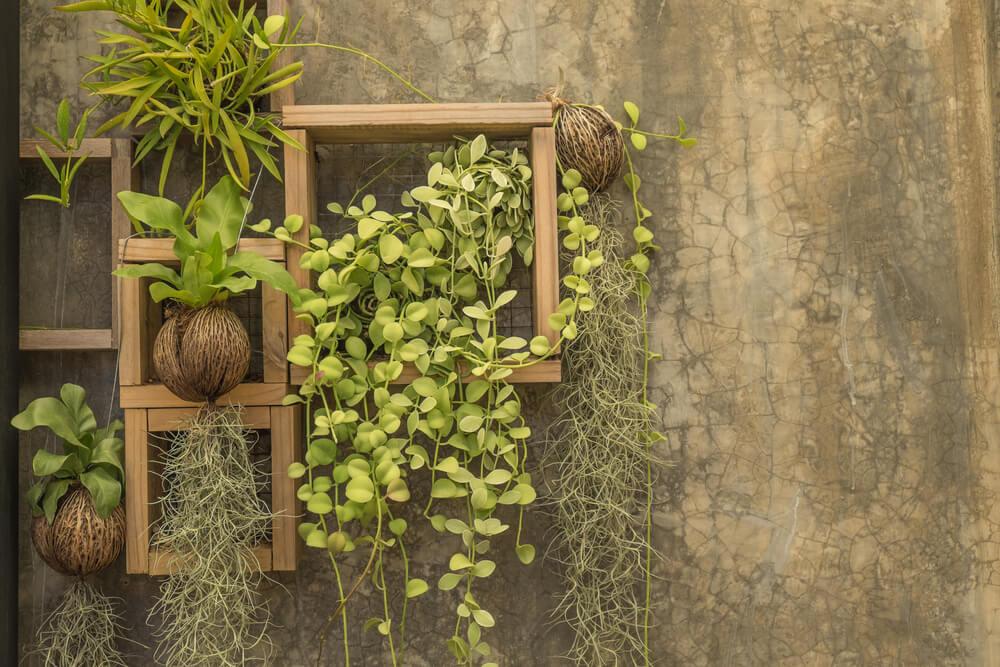 crear un jardín vertical