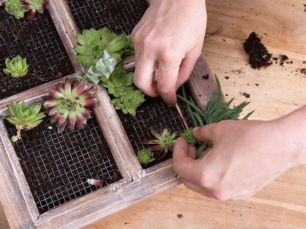 plantas para jardín vertical